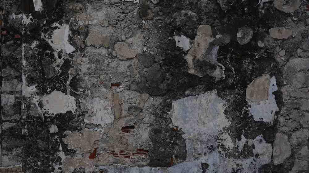 black mold on concrete