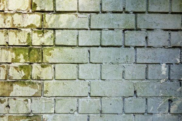 Mold doesn't grow on bricks? Not true.